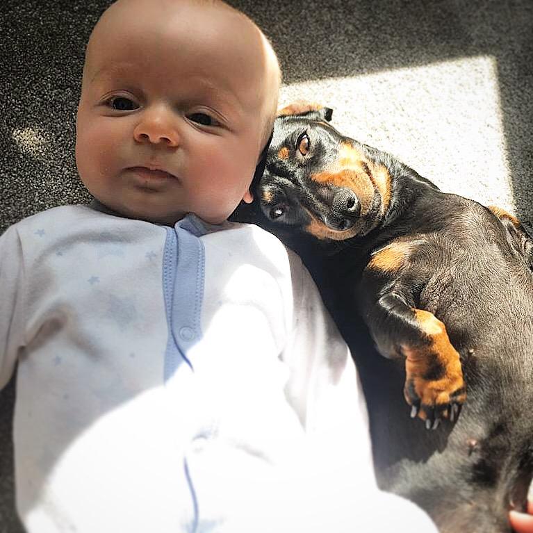 Jack and Dusty the Mini Dachshund